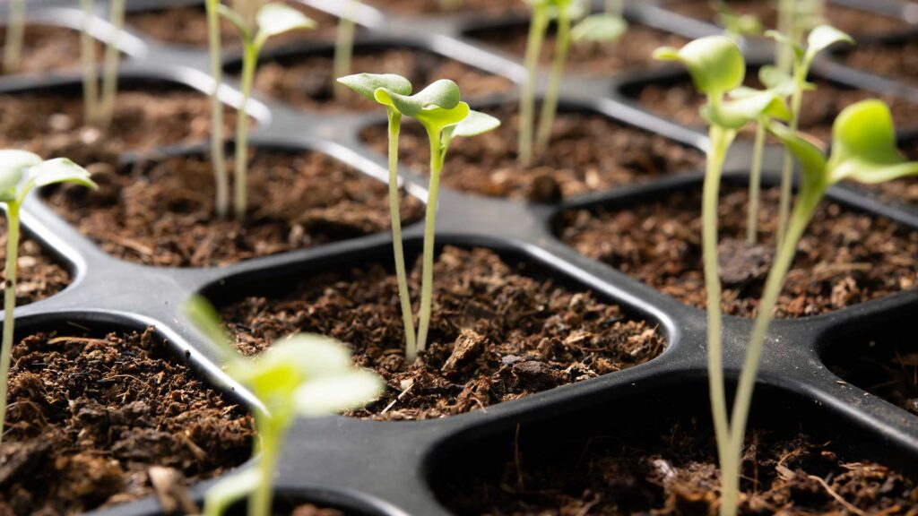Guide to Successfully Sowing Seeds