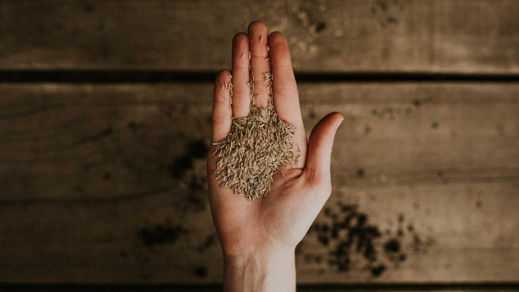 Guide to Successfully Sowing Seeds Podcast